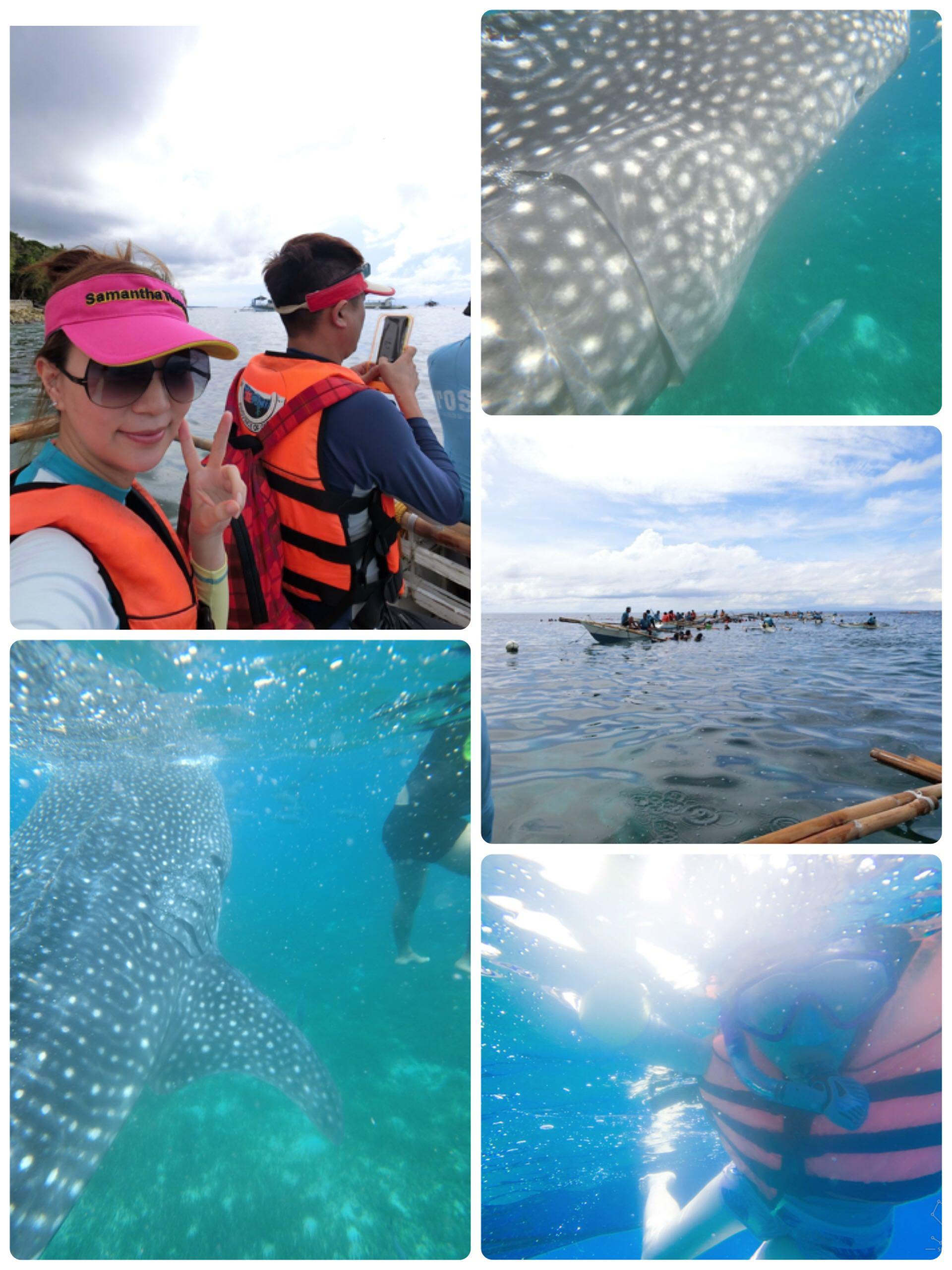 讓人震撼的『歐斯陸Oslob與鯨鯊共游』此生必訪的的不可思議奇妙體驗(內有影音分享)♥