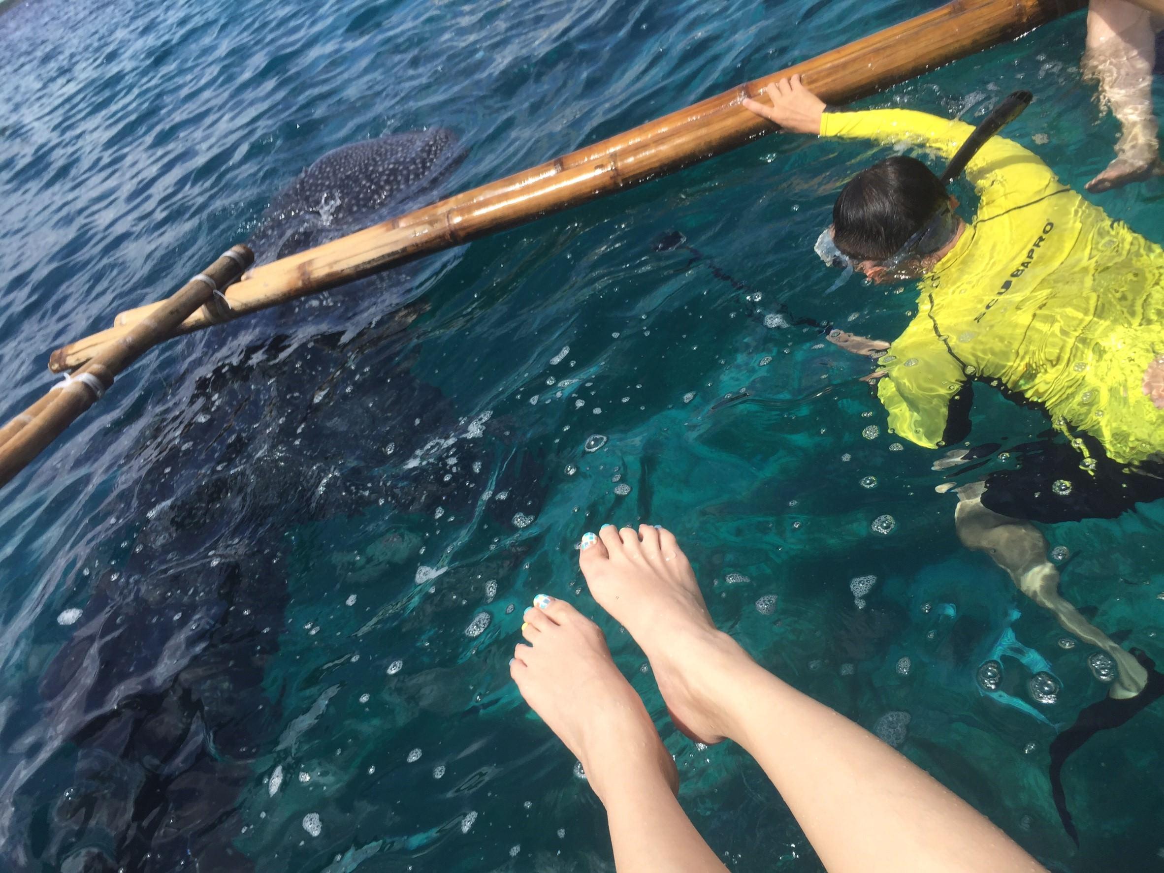 鯨豚共游_5998