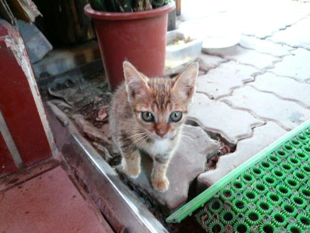小貓咪認養….請大家幫忙喔~~(感恩)