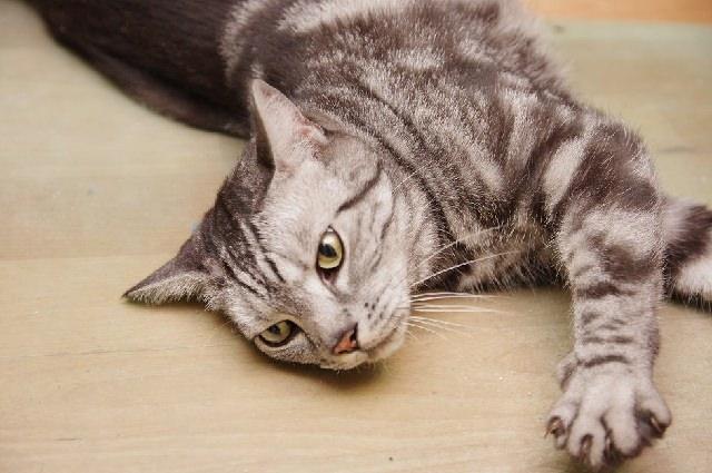 貓咪歷險記!!